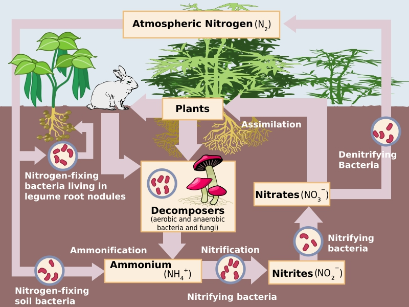 KCS Engineering - Composting and the Nitrogen Cycle